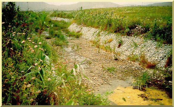 Example of vegetated gabion channel