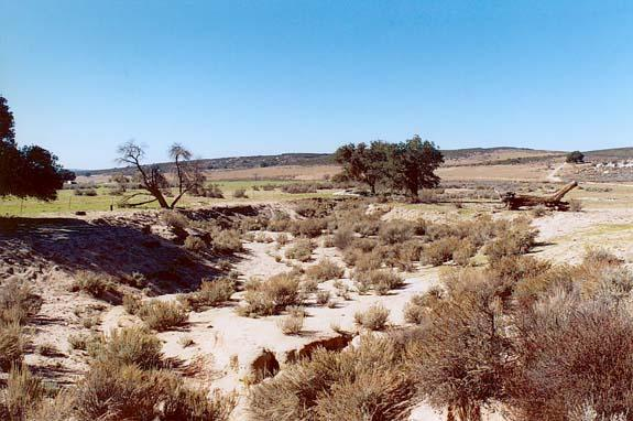 Downstream view of Campo Creek subbasin.