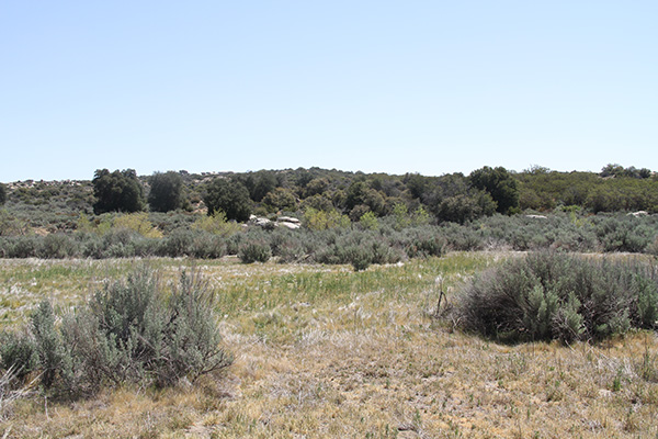 Riparian vegetation in McCain Valley