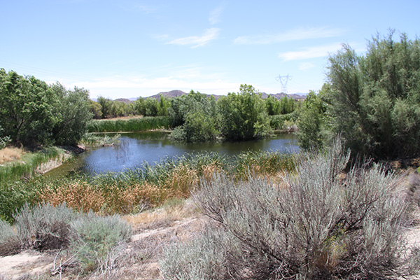 Large pond in the McCain Ranch