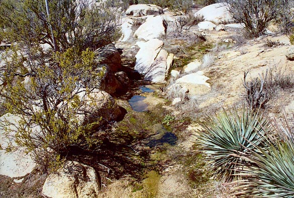 Close-up of a spring in the Tierra del Sol watershed