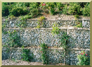 Gabion boxes with woody vegetation.