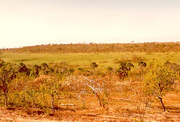 Vegetational gradient in the savannah woodlands of Mato Grosso, Brazil