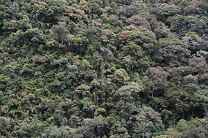 A humid tropical montane forest, Zamora-Chinchipe, Ecuador.