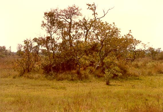 Small earthmound in the flood plain of the Araguaia river, Mato Grosso, Brazil.
