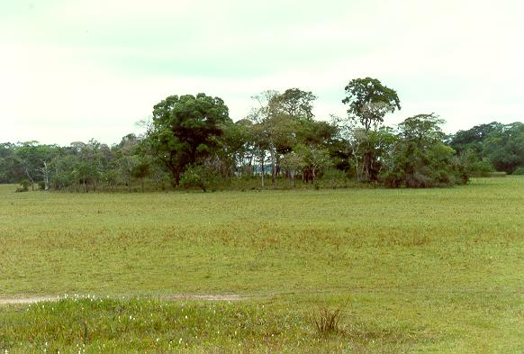 Large vegetated earthmound in the Pantanal of Mato Grosso, Brazil.