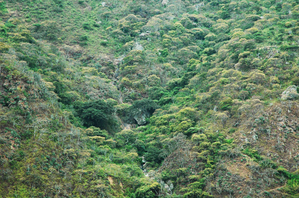 Tropical montane biome, headwaters of the Moyan river, Lambayeque, Peru