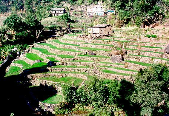 Agricultural terraces in the Himalayas, Uttar Pradesh, India.