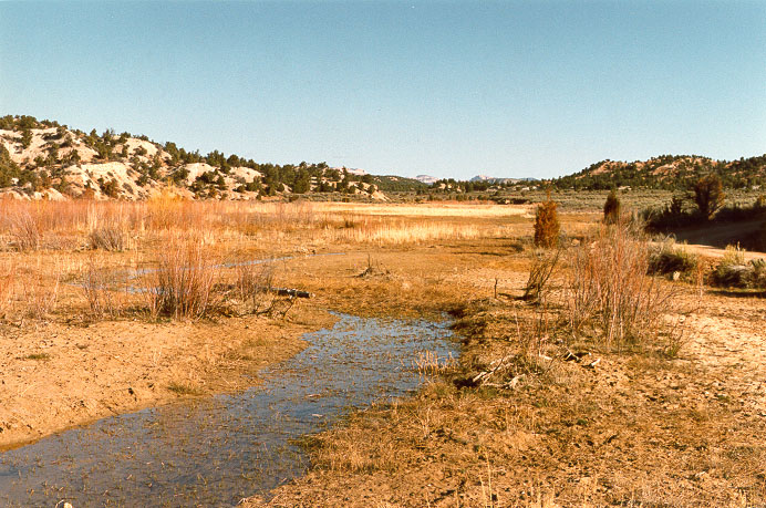 A small stream, or rivulet, upstream of Sheep Creek Barrier reservoir, Utah