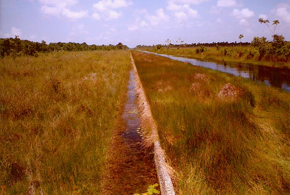 The 8000-ft long relief weir,<br> 						     Boerasirie Conservancy, Guyana