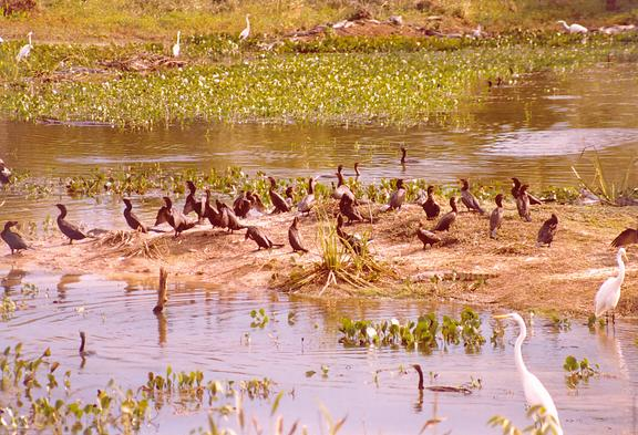 Wildlife in the Pantanal of Mato Grosso, Brazil