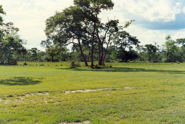 Small vegetated earthmound (murundu) in the Pantanal of Mato Grosso, Brazil (1990)