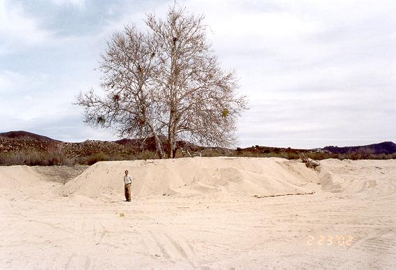 Mr. Shetty standing in front of island of vegetation left on sand pit, El Barbon Wash, Baja California, February 23, 2002