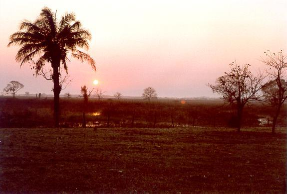 Dawn at the ATTZ near Rio Cassanges, Pantanal of Mato Grosso, Brazil.