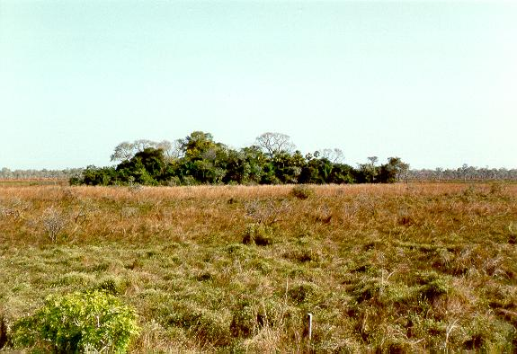 Vegetated earthmound (capão) in the Pantanal of Corumba, Mato Grosso, Brazil.