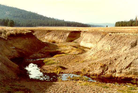 Incised gully at Dotta Canyon,  in the Feather river watershed, Northern California
