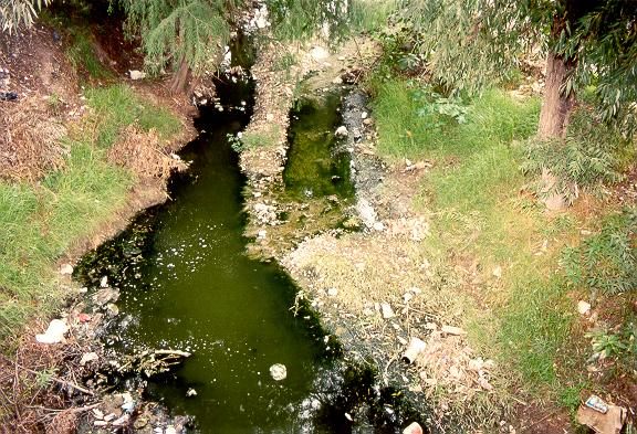 Sewage contamination of a small stream.