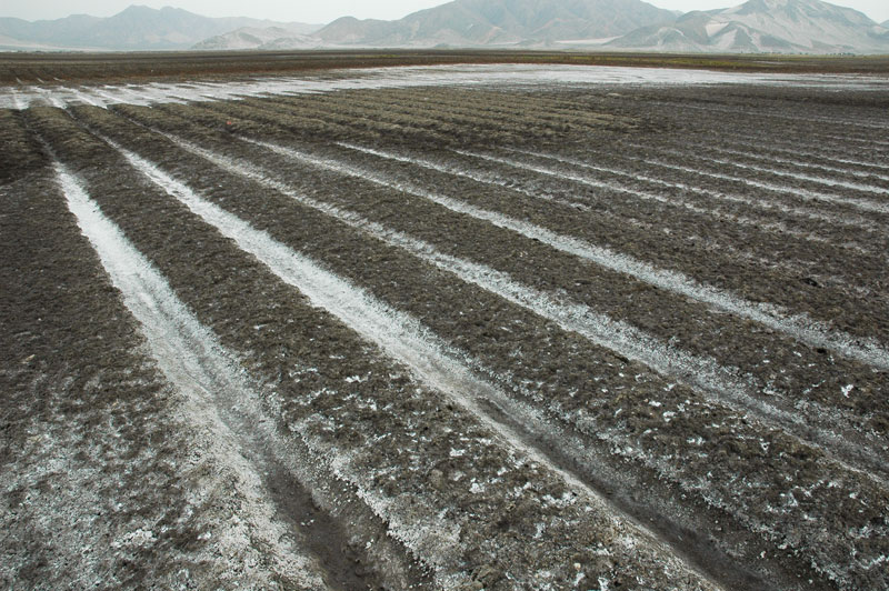 Salinized irrigation field, Chao valley, Peru