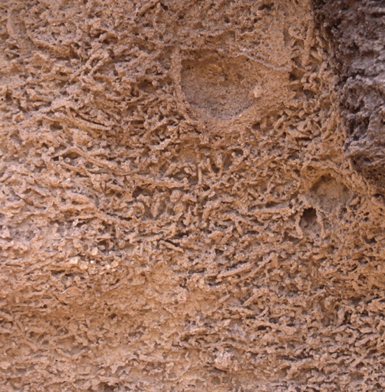 Bioturbation (Carlo Messina, University of Catania, Italy)