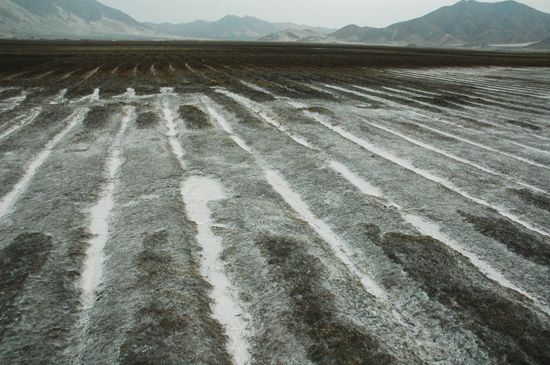 Salt-affected irrigation field in the Chao valley, Peru