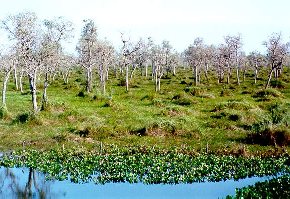 Great Swamp of Mato Grosso, Brazil