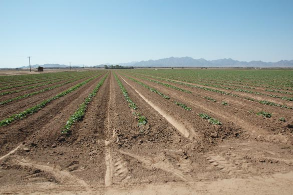 Irrigated field, Wellton, Arizona